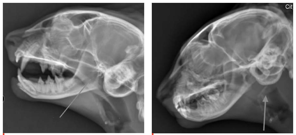 Balance It Feline >> Vets on the Balkans - an online journal for veterinarians from the Balkans - Vets on the Balkans