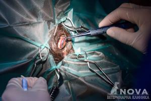 Belica_surgery121